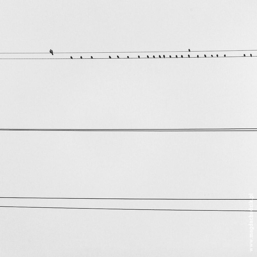 Ptaki 1234